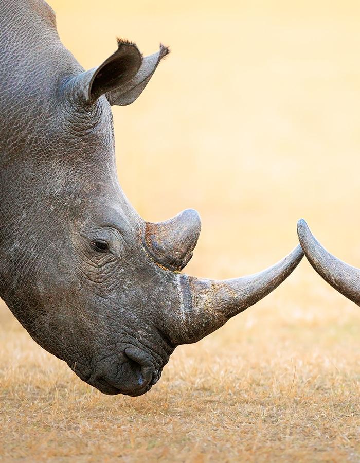 evao-voyages-afrique-du-sud-safari-3
