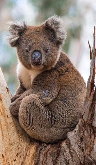 evao-voyages-australie-kangaroo-island-4
