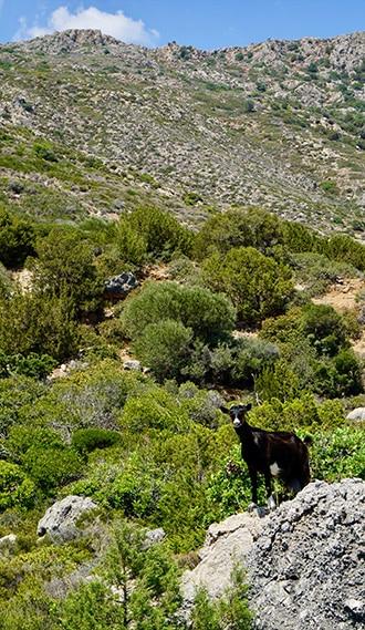 evao-voyages-crete-lassithi-12