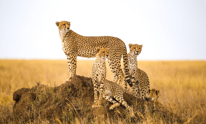 <b>Tanzanie et Nature Friendly</b>